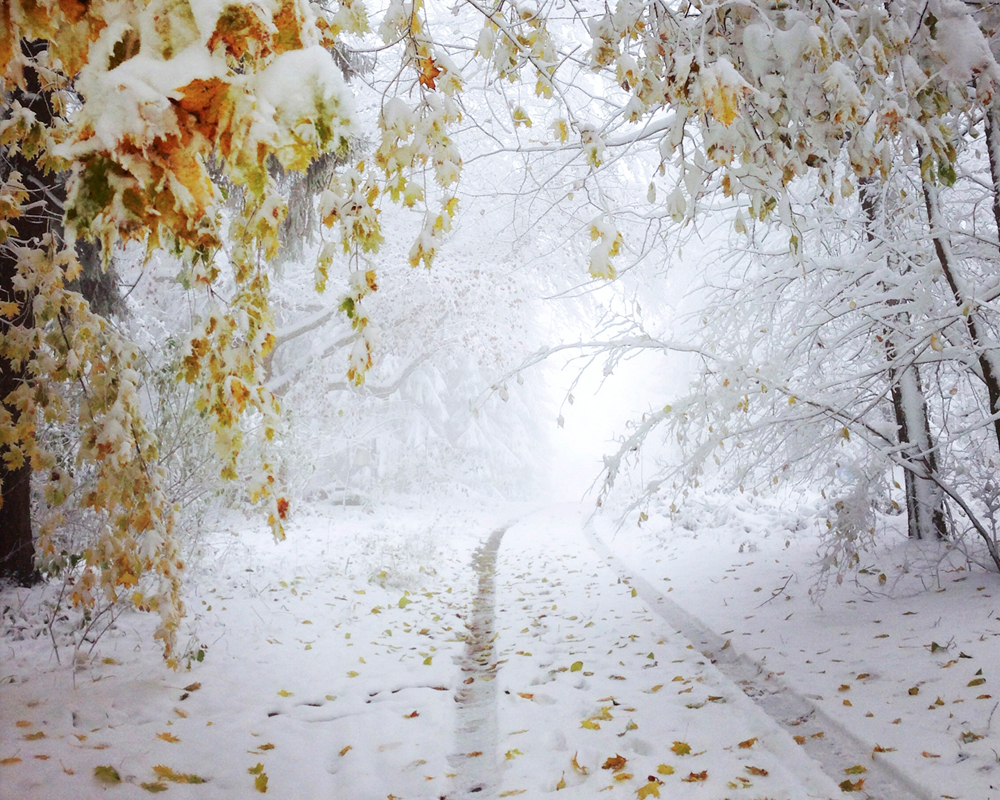 frozen_Nadine-Mojado_1