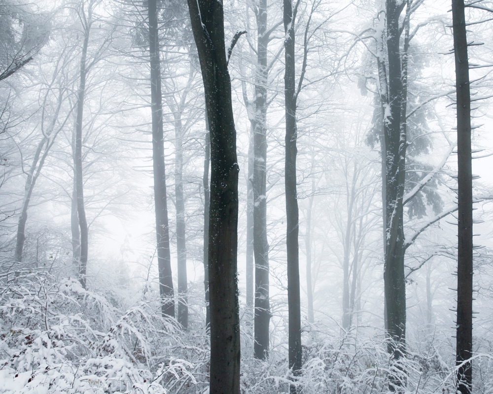 frozen_Nadine-Mojado_2